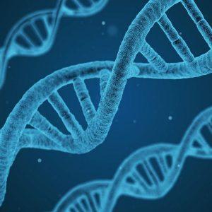 La bio-obsolescence du corps et réincarnation